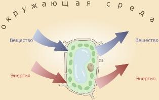 Организм связанная система