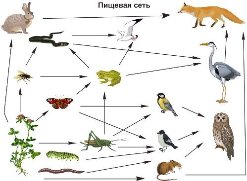 сеть — схема всех сложных