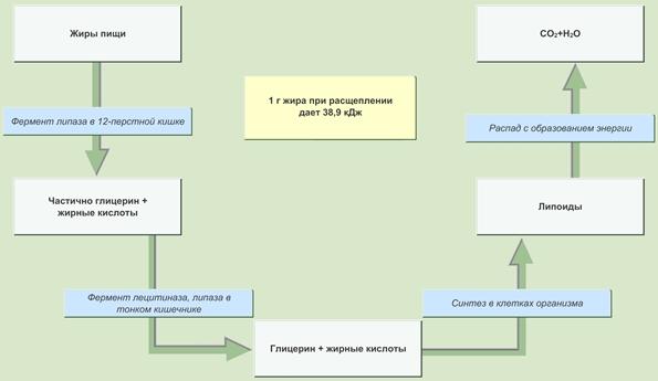 паразиты в организме человека сообщение