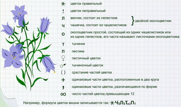 Цветки собраны
