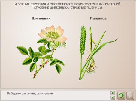 Составьте формулу цветка по