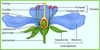 Части цветка схема для