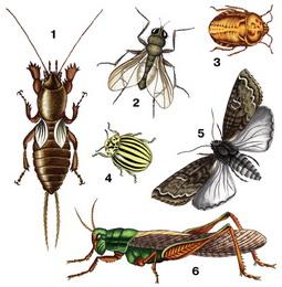 насекомые паразиты человека биология