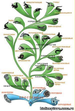 классификация животного